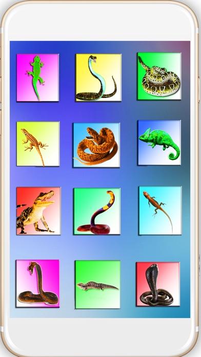 Reptil In Foto: Schlange und Eidechse auf der HandScreenshot von 1