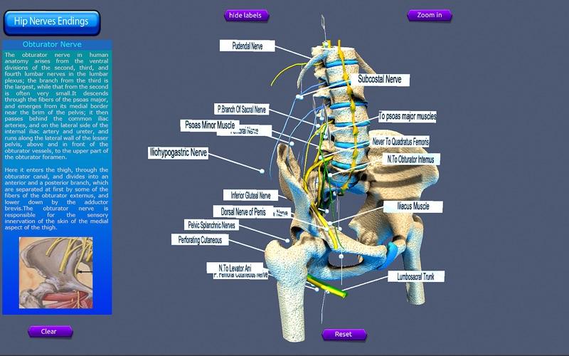 Hip Nerves Ending скриншот программы 2