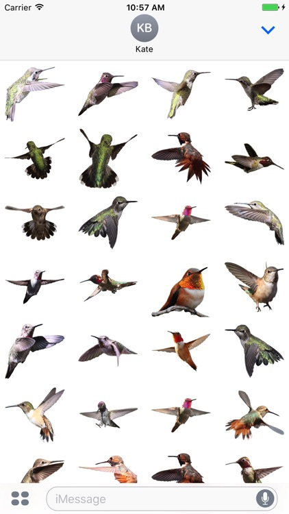 Hummingbird Sticker Pack screenshot-1