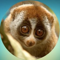 Lovely Lemurs! Stickers