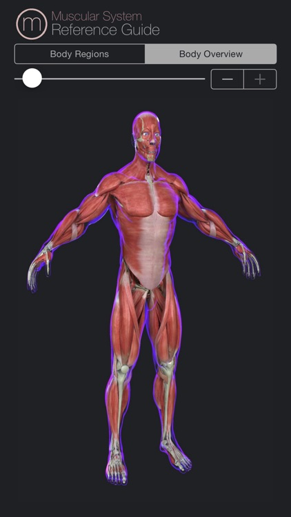 Human Muscular System Guide screenshot-4