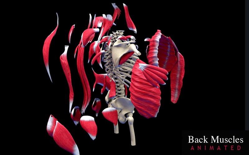 Back Muscles Animated скриншот программы 5