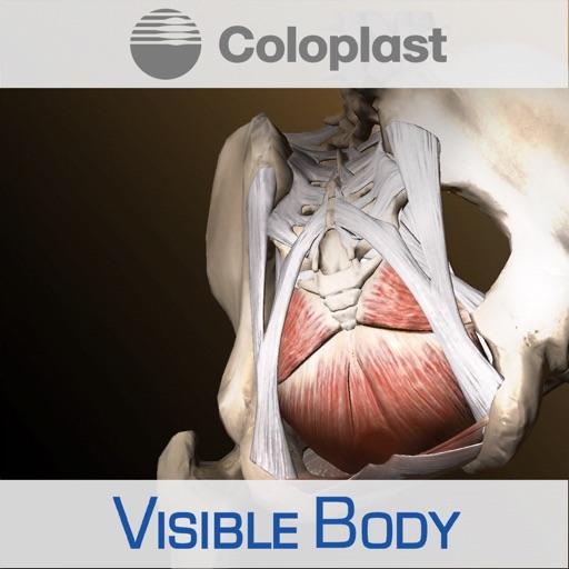 Pelvic Anatomy for Coloplast