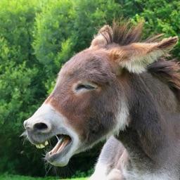 Donkey Sounds!