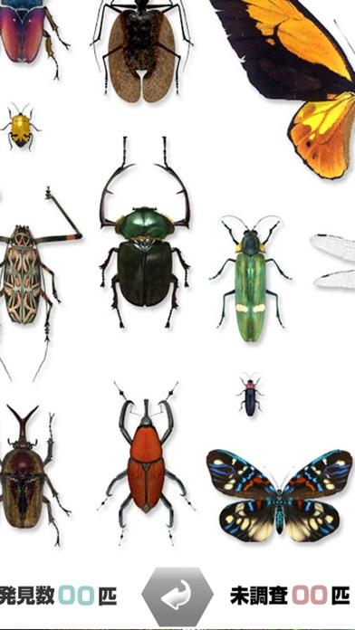 世界の昆虫採集 screenshot1