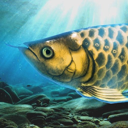 稚魚から育てるアロワナ