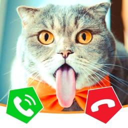 Call Cat 2
