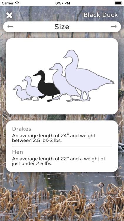 Duck ID App Premium screenshot-4