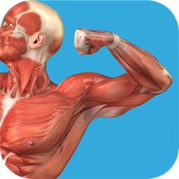 Student Muscle & Bone Anatomy 3D Visual Dictionary with Quiz Master