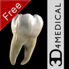 Dental Patient Education Lite