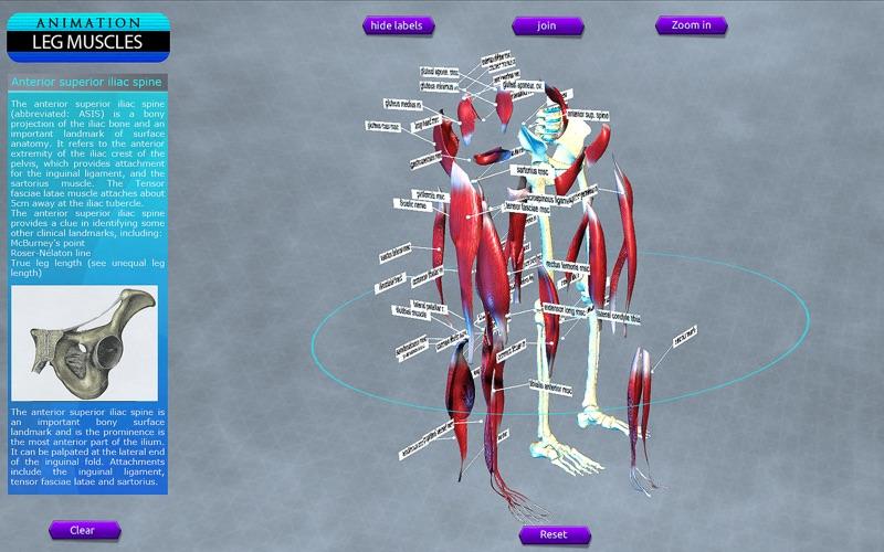 Leg Muscles Motion скриншот программы 4