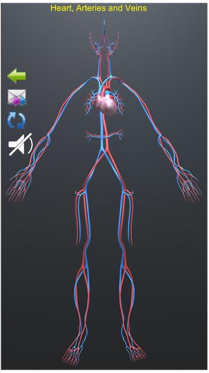 Human Anatomy Encyclopedia 3D screenshot-7