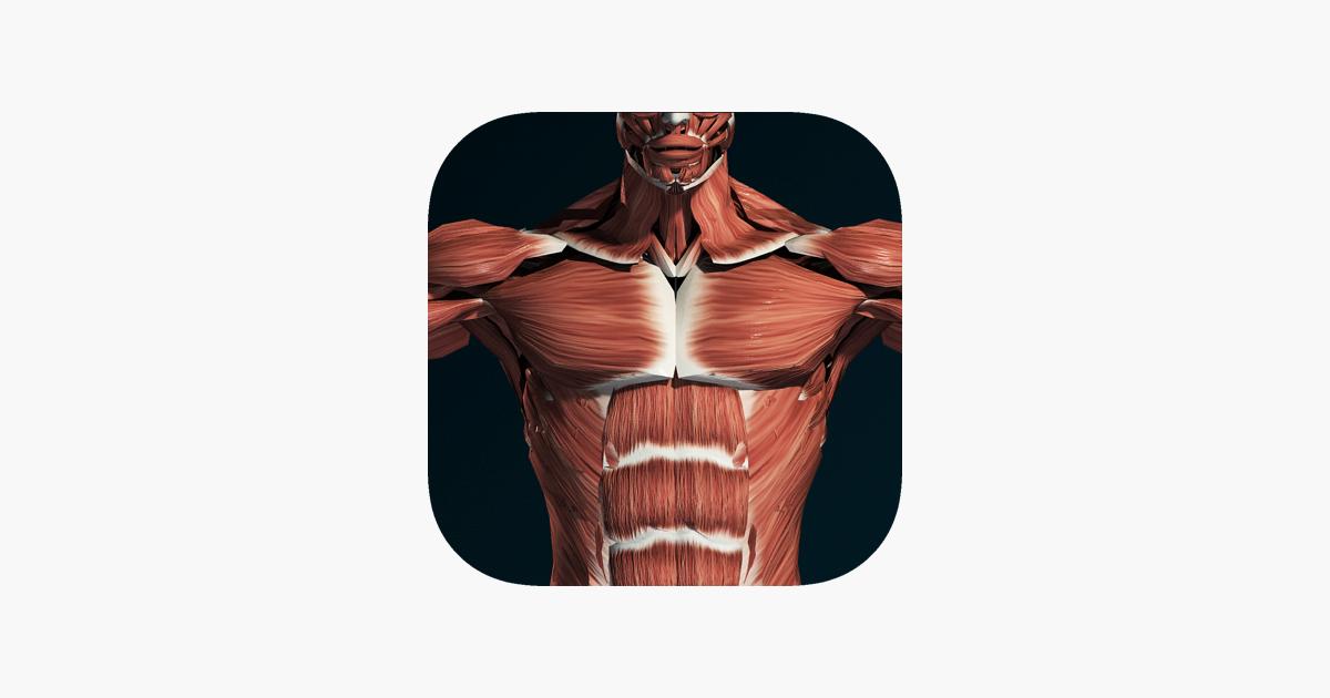 Sistema Muscular 3D (Anatomía) en App Store