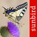 Butterfly Id - UK Field Guide