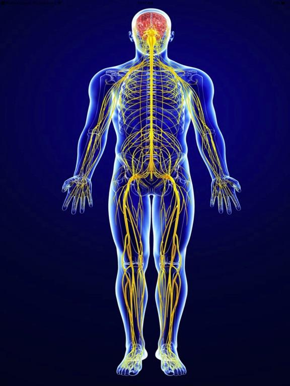 Nervous System Facts Quiz 3000 App Price Drops