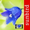Blumen Id Automatik heimische Wildblumen bestimmen