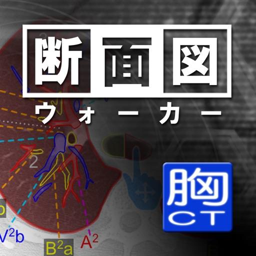 断面図ウォーカー胸部CT