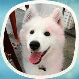 Cute doggies! Stickers