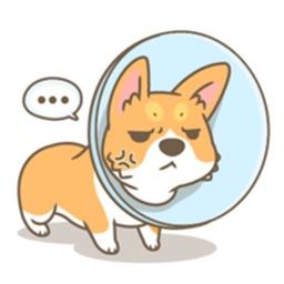 A Cute Corgi Dog Stickers