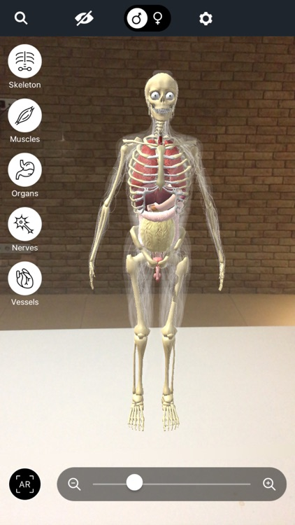 Discover Human Body AR