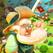 Farm Slam - Match 3 & Build