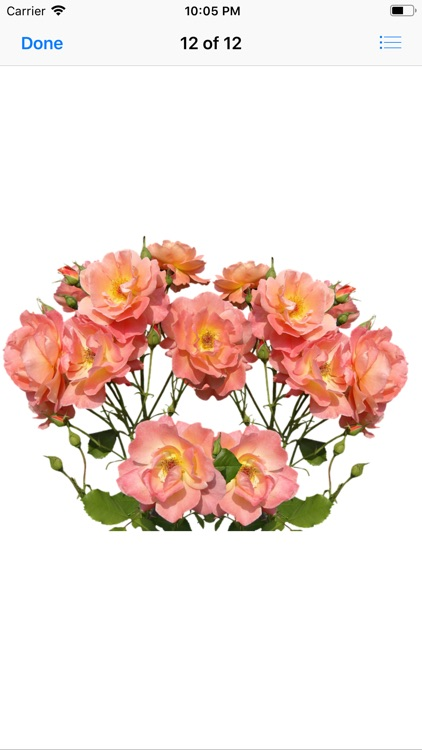 Roses Stickers screenshot-9