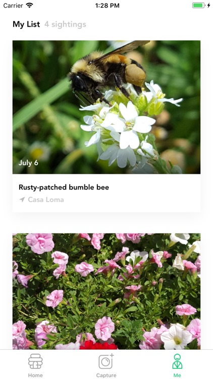 Bumble Bee Count