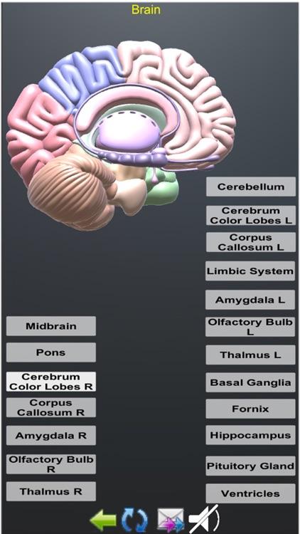 Human Anatomy Encyclopedia 3D screenshot-4