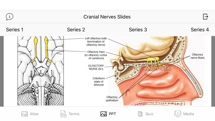 Cranial Nerves Plus screenshot-8