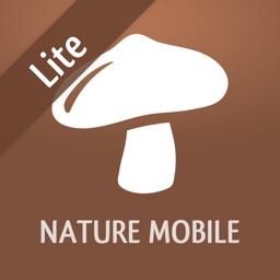 Mushrooms LITE
