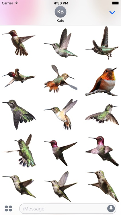 Hummingbirds - Medium (Retina)