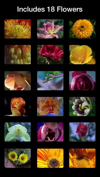 Magic Flowers - Visual Healing screenshot-4