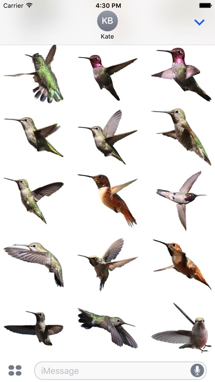 Hummingbirds - Medium (Retina) screenshot-3