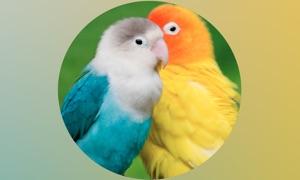 Parrots Pedia