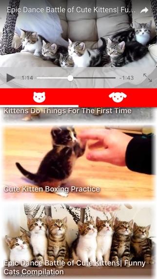 CatDogTube 〜子猫と子犬のかわいい動画〜紹介画像1