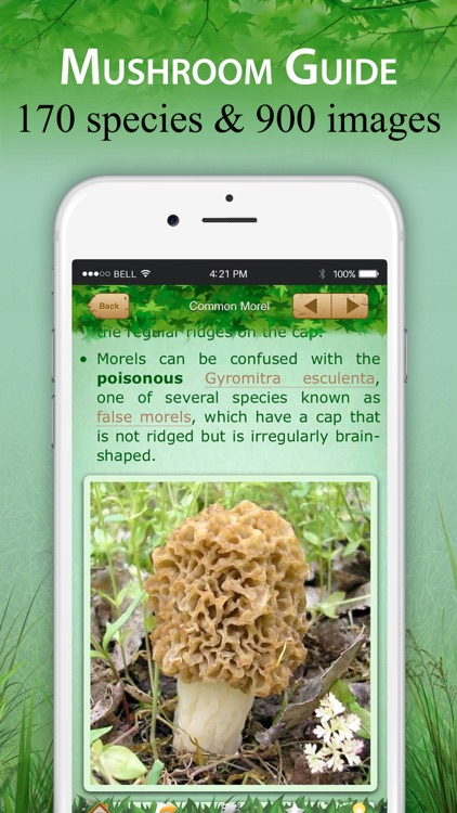 Mushroom Identifier and Guide