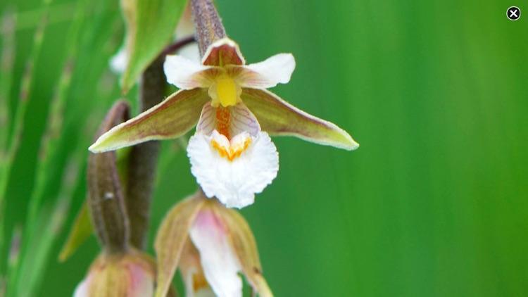 Wildflower Finder Switzerland screenshot-9