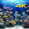 Acuario 4K