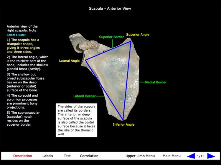 Gross Anatomy of the Skeleton screenshot-7