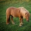 ポニーと馬の愛好家のためのパズル - 論理的思考の訓練のための無料ゲームの楽しさ