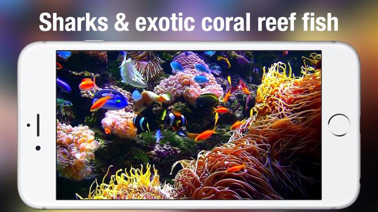 Aquarium Live HD + screenshot-3