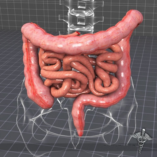 Body Parts : Small and Large Intestines Quiz icon