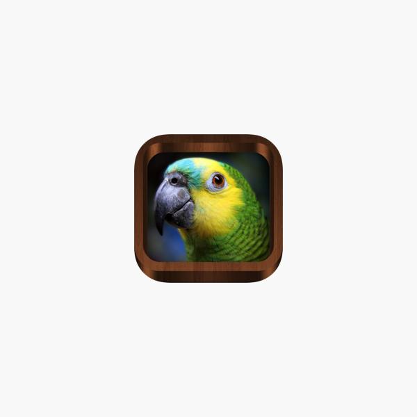Bird Songs - Bird Call & Guide on the App Store