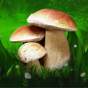 Mushroom Identifier and Guide app