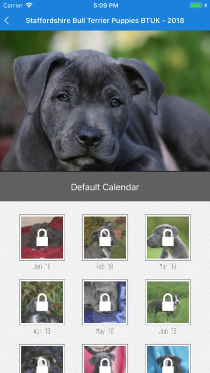 DogDays - Calendar with Dogs