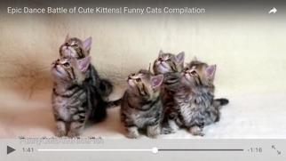 CatDogTube 〜子猫と子犬のかわいい動画〜紹介画像3