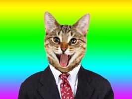 Animated Cat Stickers Pro
