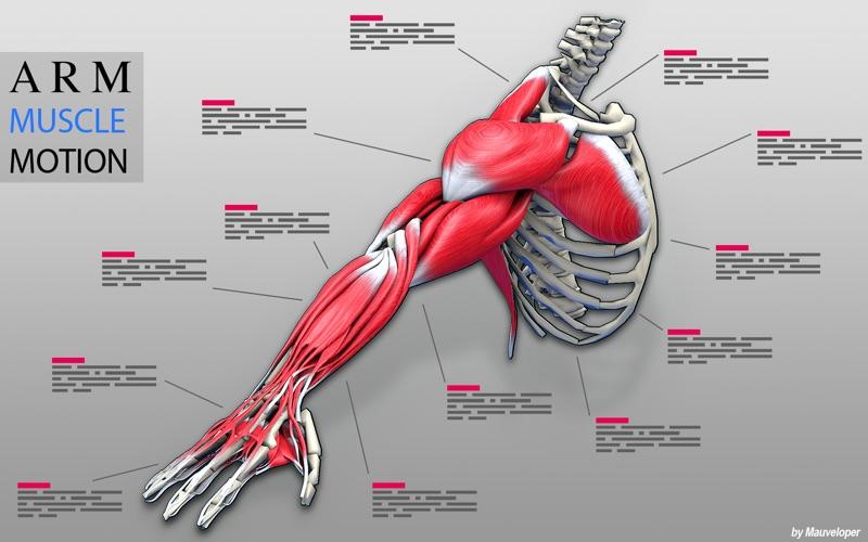 Arm Muscles Motion скриншот программы 1