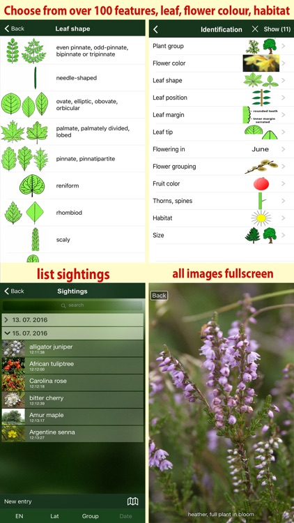 Tree Id Canada - identify over 1000 native Canadian species of Trees, Shrubs and Bushes screenshot-4