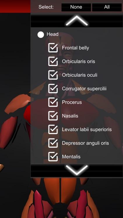 Muscular System 3D (anatomy) screenshot-4